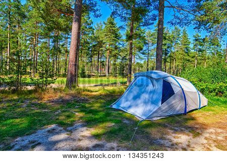 Lonely Tent on a Pine forest Campsite Pitch