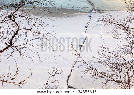 snow landscape with tracks river cracks and trees