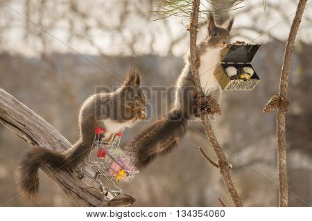 red squirrels on shopping cart and in tree and chest with eggs