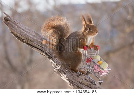 red squirrel with shopping cart with eggs