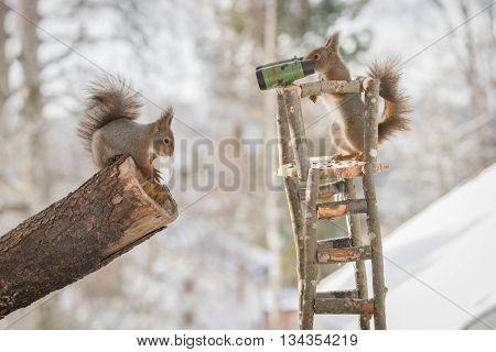 close up of red squirrels in a watch tower while snowing