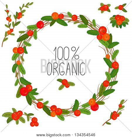 Hand drawn wreath with red berries and branches. Round frame. Cute hand drawing wreath. Vector layout with copyspace. Decorative elements set.