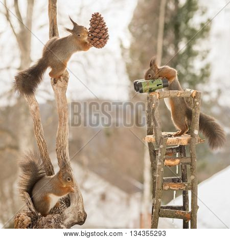 close up of red squirrels in a watch tower and on tree trunk