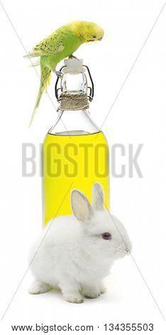 Rabbit and budgerigar bird on olive oil bottle isolated on white background.