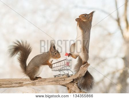 red squirrels on shopping cart with eggs