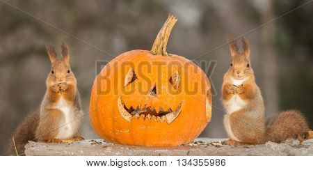 red squirrels on ice with a pumpkin with face