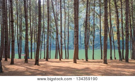 Pine forest in front of the lake at PangOung Thailand