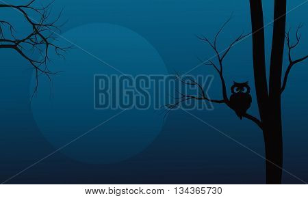 Silhouette of owl in tree Halloween at the night
