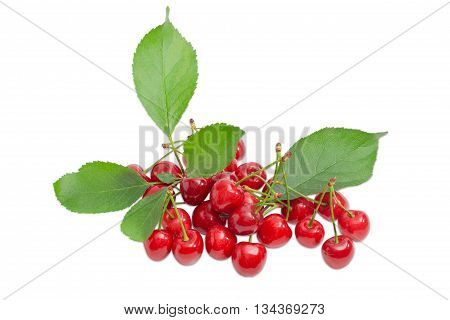 Pile of a ripe dark red sweet cherries with the stalks and branch with leaves on a light background