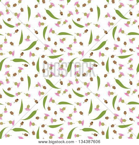 Seamless pattern made of illustrated gum tree nuts flowers and leaves