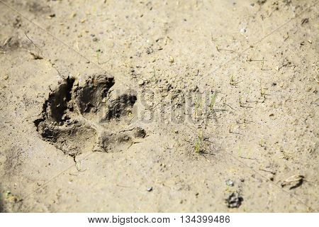 Color image of a dog paw imprint in mud.