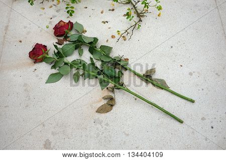 Two roses on the tombstone in memory of the tragic death