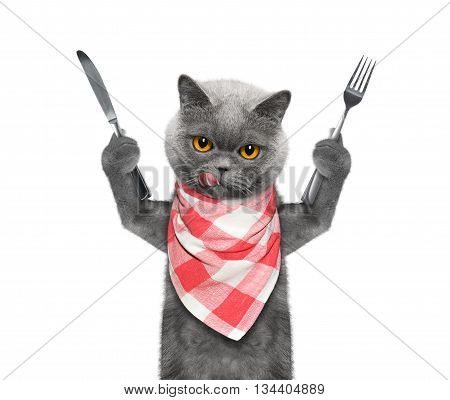 cat wants to eat and hold knife and fork -- isolated on white