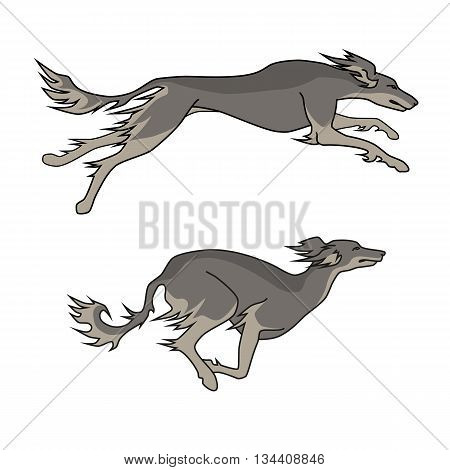 Color vector image of running dogs saluki breed, two poses