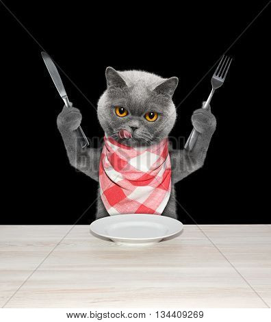 cat finished to eat and hold knife and fork -- isolated on black