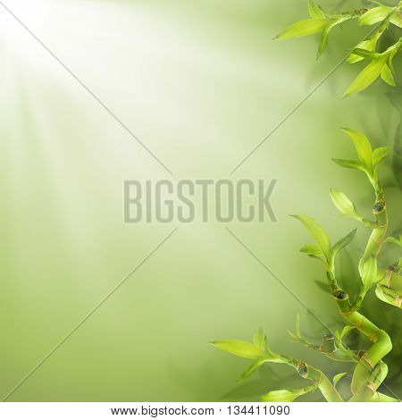 Border of bamboo leaves green nature background