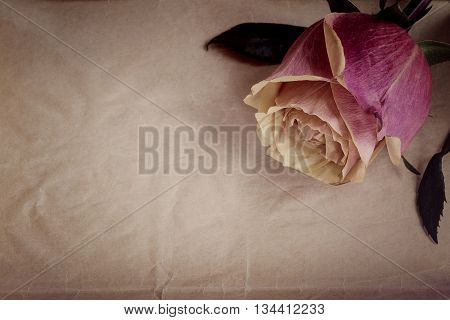 Pink-yellow rose on the slate dark-grey background. Top view. Vintage effect.