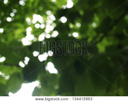 blurred summer compositon with trees and metallic frames