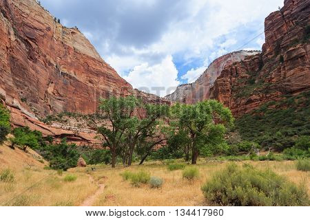 Canyon In Zion National Park In  Utah