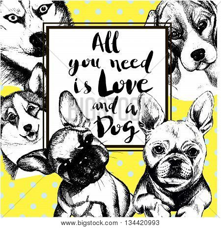 Vector poster illustration of domestic dogs. All you need is love and a dog. Siberian husky begle welsh corgi pembroke french bulldog. Hand drawn vintage engraved concept isolated on yellow and polka dot backgroung.