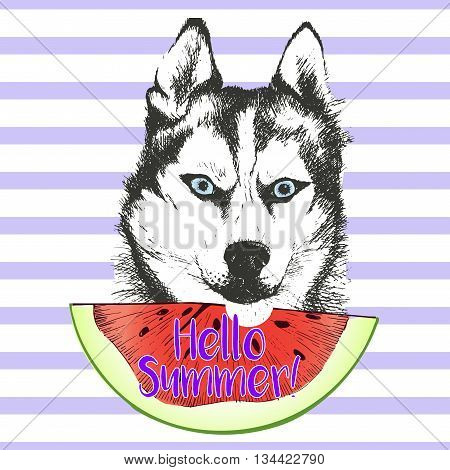 Vector hand drawn illustration of siberian husky or alaskan malamute dog eating the watermelon slice. Hello summer. Isolated on light green strips. fresh fashion vibrant summer poster.