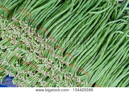 yardlong bean harvested and bundled before sale to customer