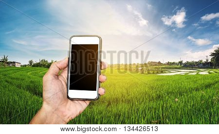Smart phone in hand with rice field panorama in sunset, with copy space on mobile phone screen telecommunications in rural area
