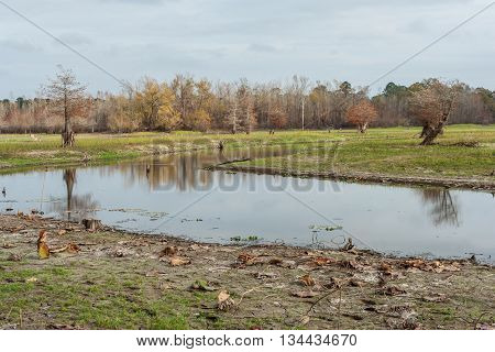 Swamps And Lakes Of Central Texas During  Fall