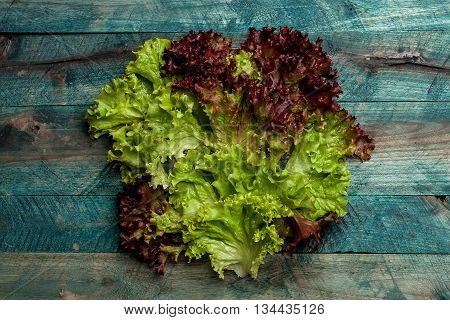 Fresh bunch of lollo rosso salad leaves green red and wet lettuce on wooden table background