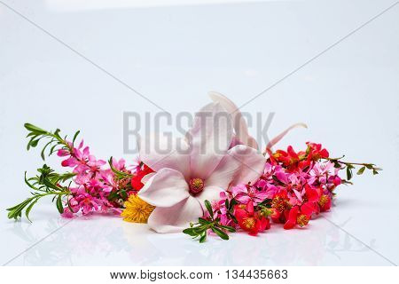 Beautiful flowering twig and magnolia colorful spring flowers with green leaves isolated on white background