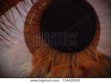human woman brown eye iris macro pupil and eyelashes