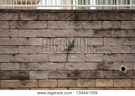 monitor lizard, waran, dragon, is walking on a wall in an asian city