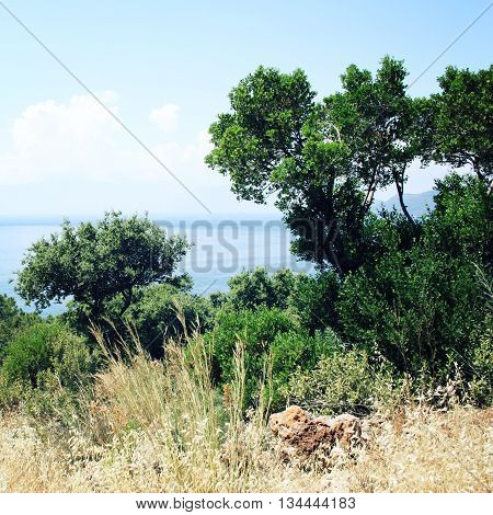 View of Mediterranean Sea from Cape Gelidonya. Pine trees on the southern coast of Turkey. Calm blue sea and clear sky. Spring sunny day in Antalya province Turkey.
