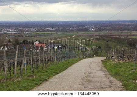 View Over Vineyards And The Town Of Neuweier, Baden-wurttemberg, Germany