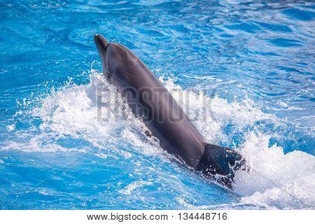 a cute dolphins during a speech at the dolphinarium Batumi Georgia.