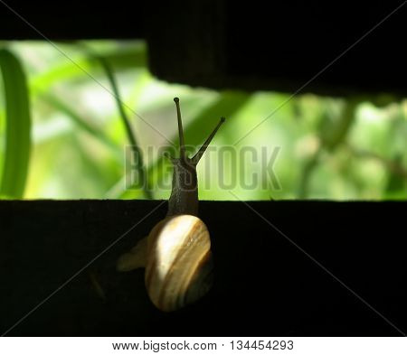 Snail discover a new world. Snail start moving from darkness to light.