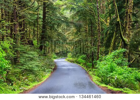 Road Running In Temperate Rainforest Of Oregon Coast,  Usa