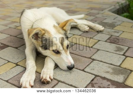 Adorable mixed breed young dog resting on a sidewalk