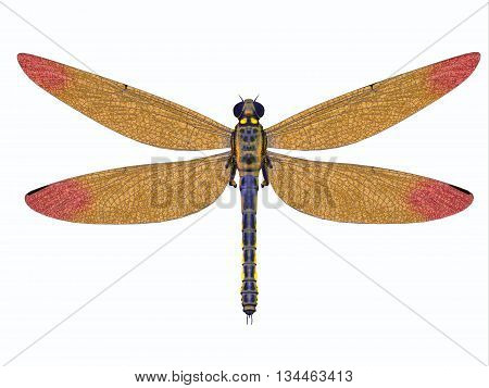 Carboniferous Meganeura Dragonfly 3D Illustration - Meganeura was a large carnivorous dragonfly that lived in Europe during the Carboniferous Period.