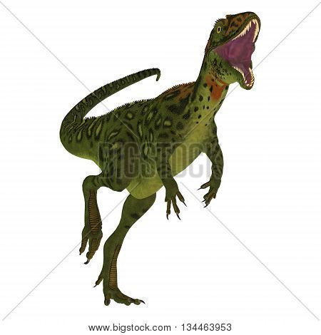 Masiakasaurus Dinosaur on White 3D Illustration - Masiakasaurus was a theropod dinosaur that lived in Madagascar during the Cretaceous period.
