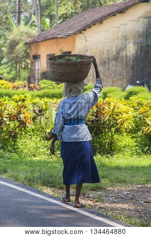 Woman Carrying Weight In Goa, India