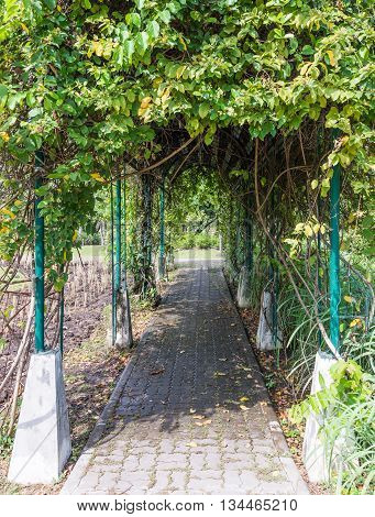 Plant arch camber over the brick way in the urban park.