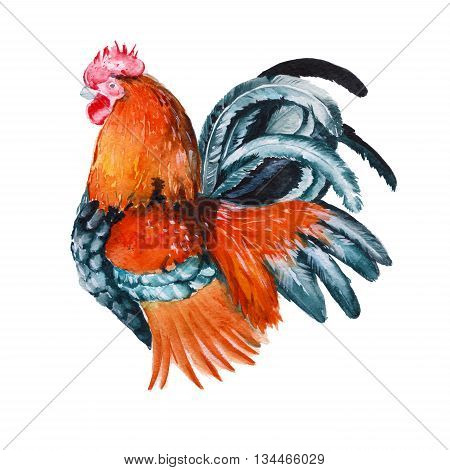 rooster. isolated year of the rooster. watercolor illustration