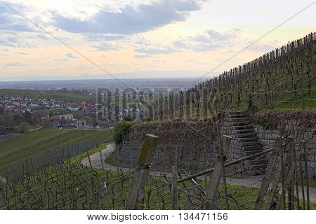 Road With Terrace And Steps On A Vineyard In Baden-wurttemberg, Germany