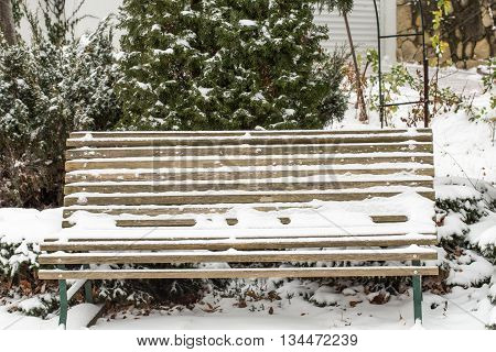 First snow on the tuja and garden bench. Close up of bench front tuja.