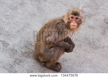 Small Monkey Is Sitting On A Stone