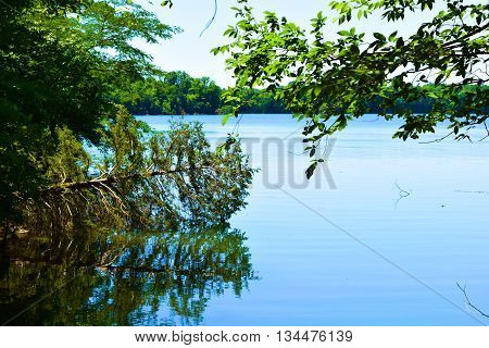 North American Deciduous Forest surrounding Tims Ford Lake, TN with trees reflecting on the water