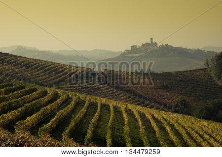 Landscape of Langhe vineyards and hills of Piedmont