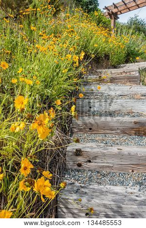 Brilliant yellow flowers grow next to outdoor wooden steps.