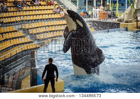 PUERTO DE LA CRUZ, TENERIFE, SPAIN - DECEMBER 2015:  Jumping grampus at oceanarium of Loro parque in Puerto de la Cruz, Tenerife island, Spain
